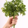 Bunch of parsley in hand — Stock Photo #63412199