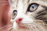 Portrait of a small cat  — Stockfoto
