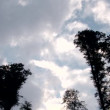 Clouds over Tall Trees — Stock Video #63769517