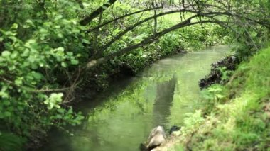 Arched Branch over Tiny River — Stock Video