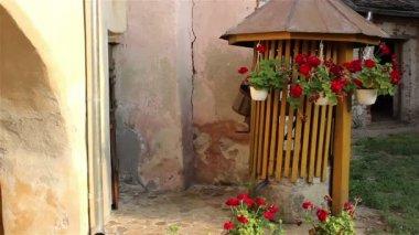 Flower Pots Swinging — 图库视频影像