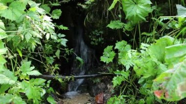 Fresh Water Spring — Stock Video