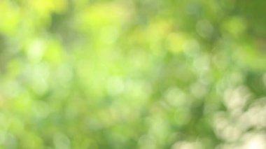 Green Light Bokeh — Stock Video