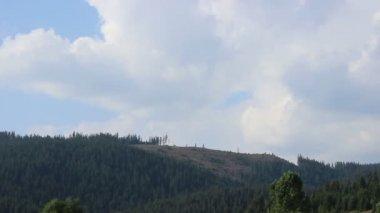 Pine Deforestation Timelapse — Stock Video