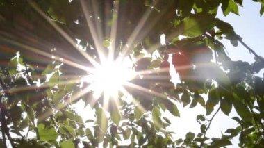 Sun Glitters Through Leaves — Vídeo de stock