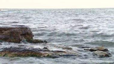Washed Stone at Shore — Vidéo