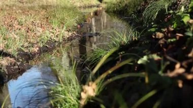 Autumnal Small Water Stream — Stock Video