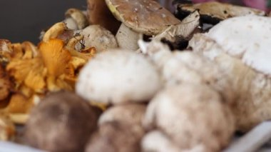 Comestible Wild Forest Mushrooms — Stock Video