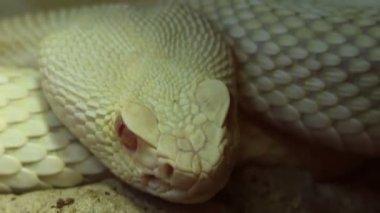 Snake Eye — Stock Video