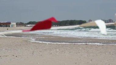 Powerful Wind on Beach — Stock Video