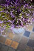 Heather flowers — Stock Photo