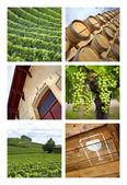Wineries — Stock Photo