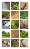 Viticulture and vineyards — Stock Photo