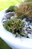 Miniaturní zahrada — Stock fotografie