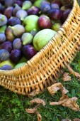 Fig and apple — Stockfoto
