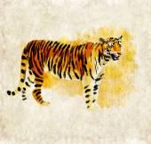 Tiger watercolor digital — Stock Photo