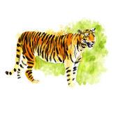Tiger digital watercolor — Stock Photo