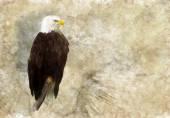 Bald eagle — Fotografia Stock