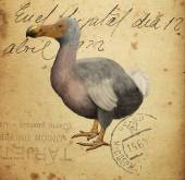 Dodo — Stock Photo