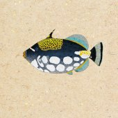 Triggerfish — Stock Photo