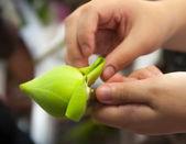 Folding white lotus — Stock Photo