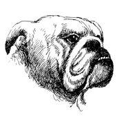 Bulldog — Stockvektor