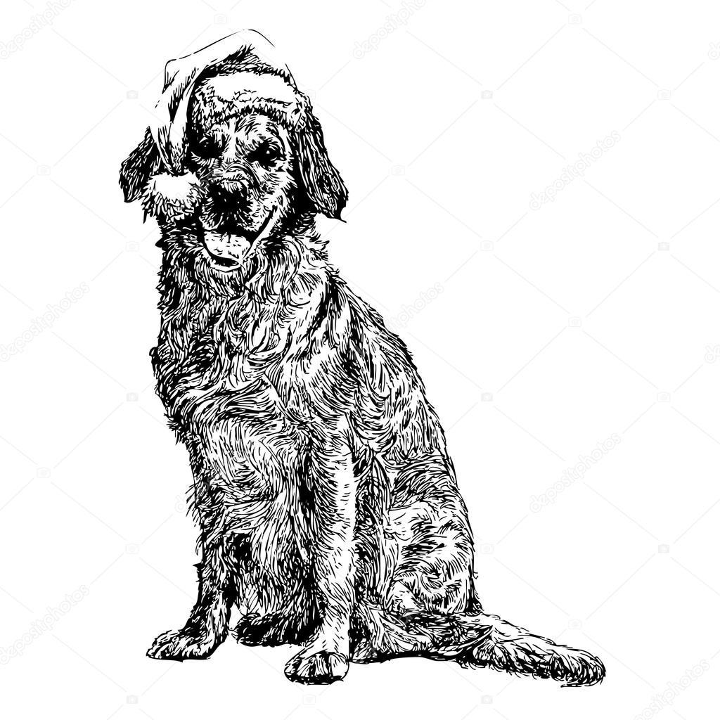 黄色拉布拉多犬