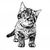 Little cat — Stock Vector