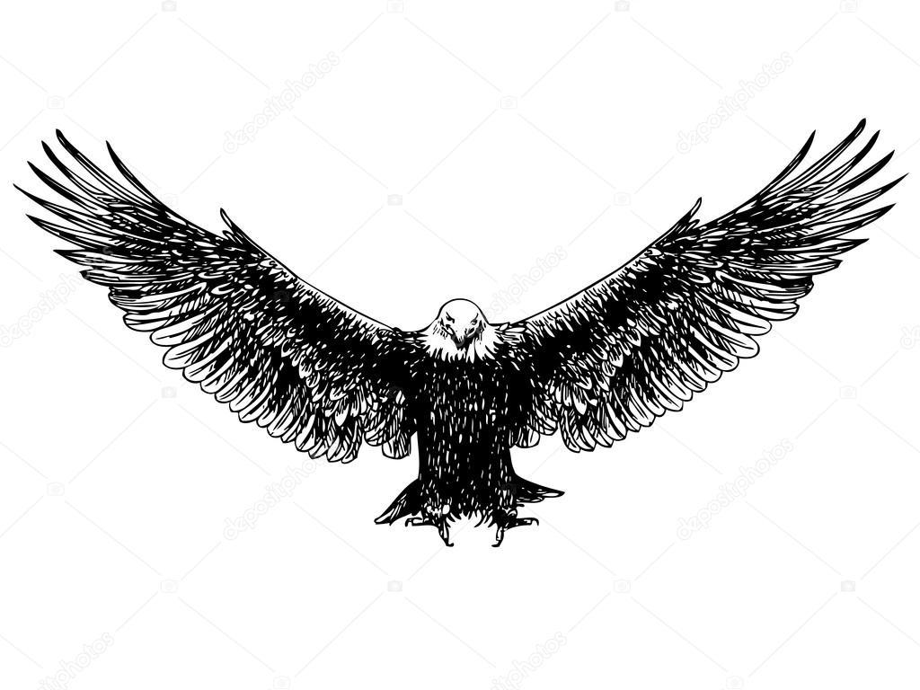 fliegender adlerhand gezeichnet � stockvektor 169 simplebe
