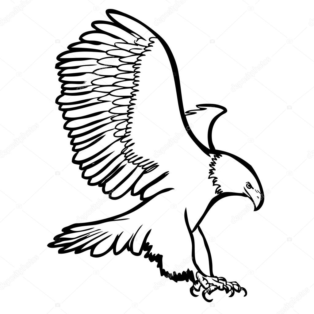 how to draw a hawk flying easy