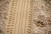 Tyre and gog footprint in the soft and golden sand — Stock Photo