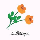 Buttercups — Stock Vector