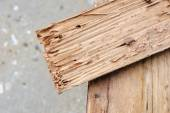 Wood damaged by termite — Stock Photo