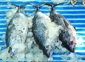 Tuna for sale — Stockfoto