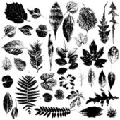 Leaf collection - vector silhouette — Stock Photo