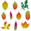 Set of various autumn leaves — Stock Vector #60339579
