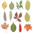 Set of various autumn leaves — Stock Vector #60339601