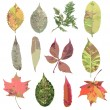 Set of various autumn leaves — Stock Vector #60339605