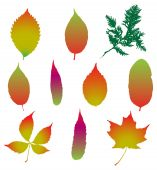Set of various autumn leaves — Stock Vector