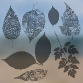 Leaf silhouettes collection — Stock Vector