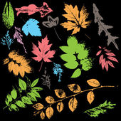 Multicolor leaves collection — Stock Vector