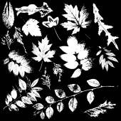 White Leaves collection — Vettoriale Stock
