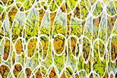 Acrylic paint texture — Stock Photo