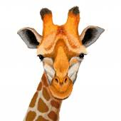Beautiful adult Giraffe — Stock Vector