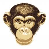 Vector image of monkey — Stock Vector