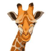 Giraffe face, grunge — Stock Vector