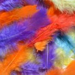 Постер, плакат: Feathers background texture