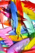 Feathers background texture — Stock Photo