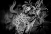 Marmoset monkey — Stock Photo