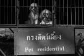 Dog in cage — Stock Photo
